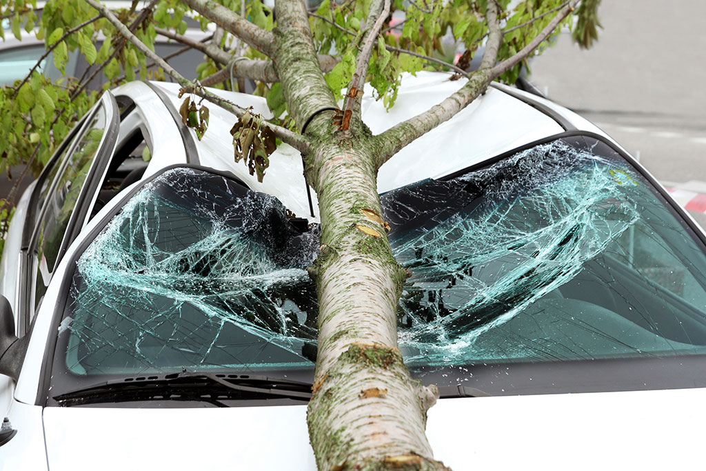 Tree damage Oxford