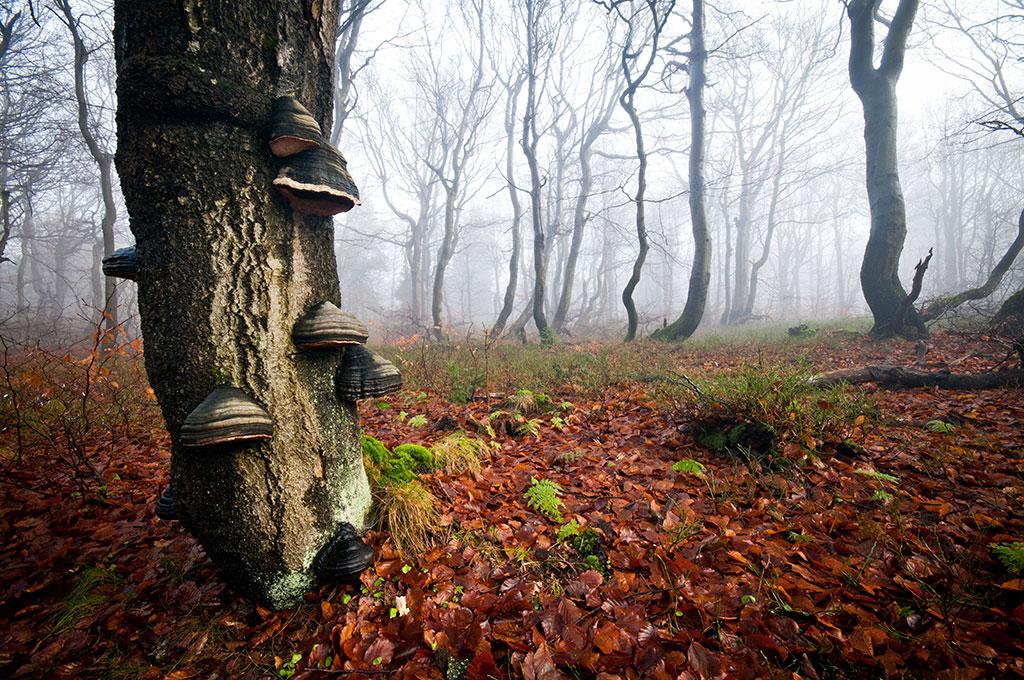Fungi on decaying tree