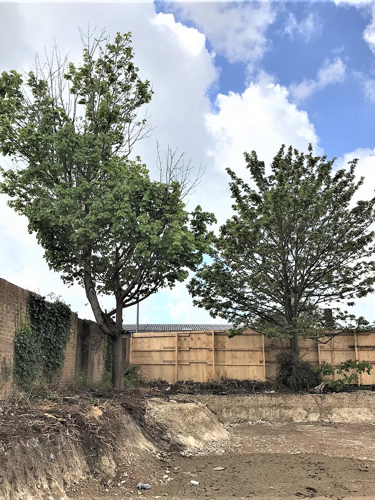 Tree damage on development sites